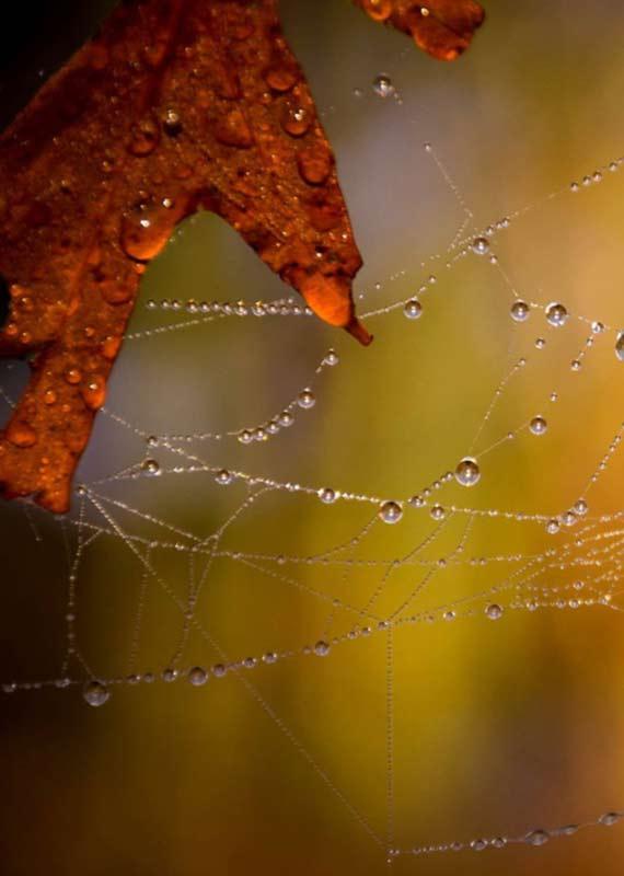 Blatt mit Spinnweben