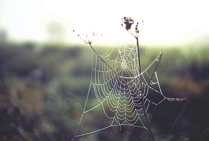 Spinnennetz Natur