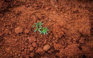 Pflanze_Entwicklung_Geduld