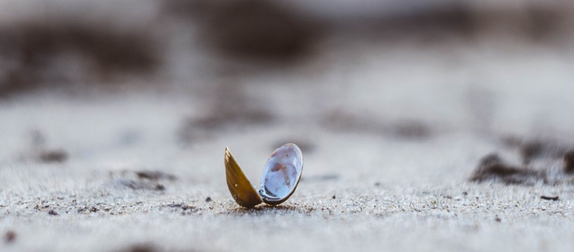 wunden und perlen