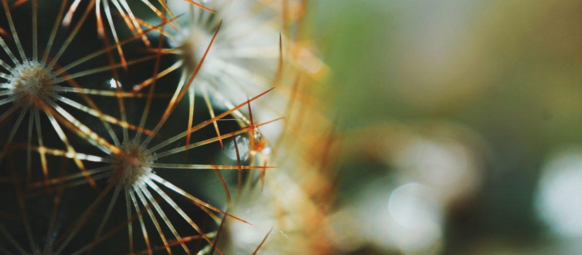 kaktus-spueren