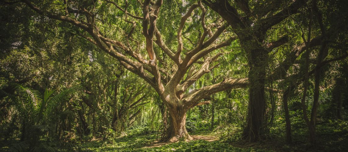 Baum_Erde